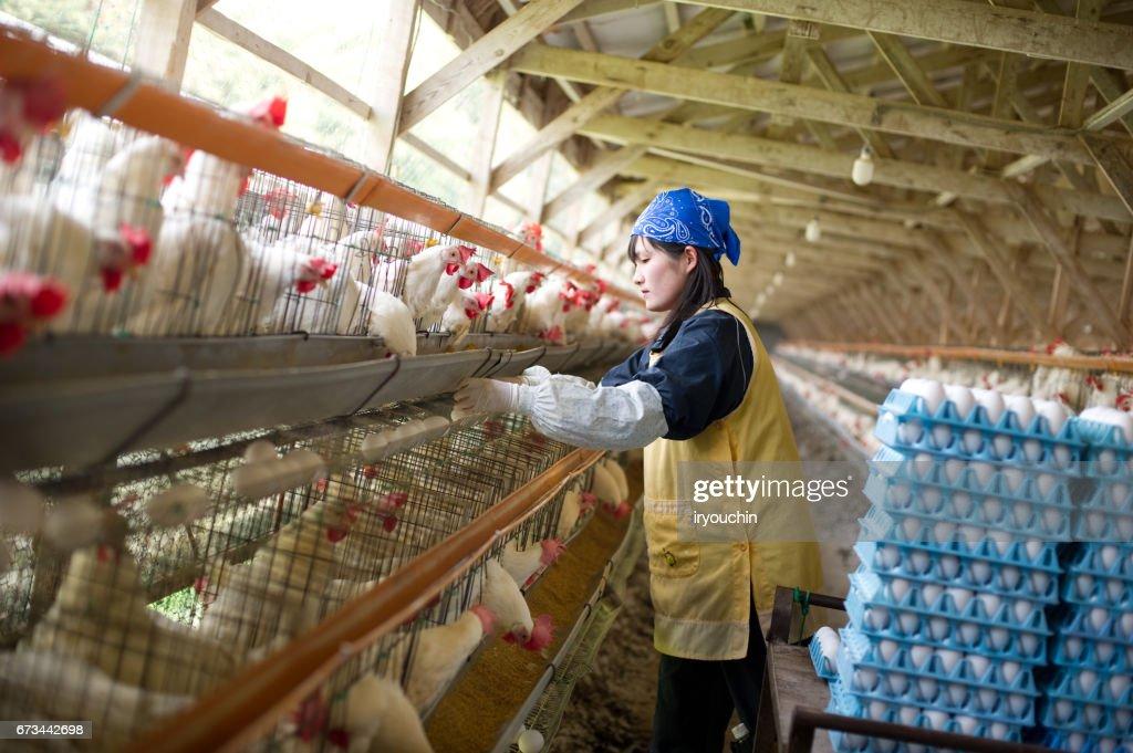 Poultry farm : Stock Photo