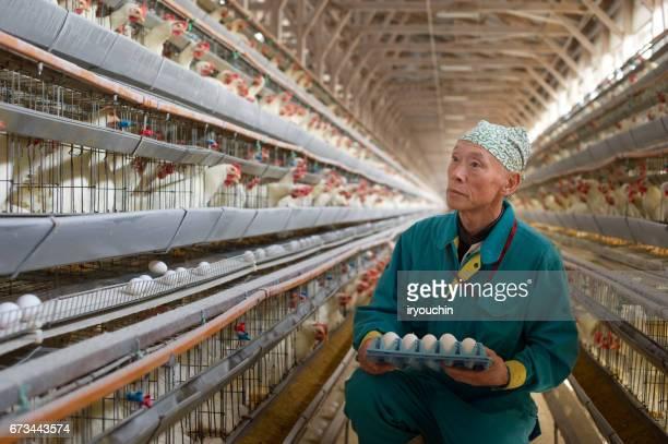 鶏肉園 - 家畜 ストックフォトと画像