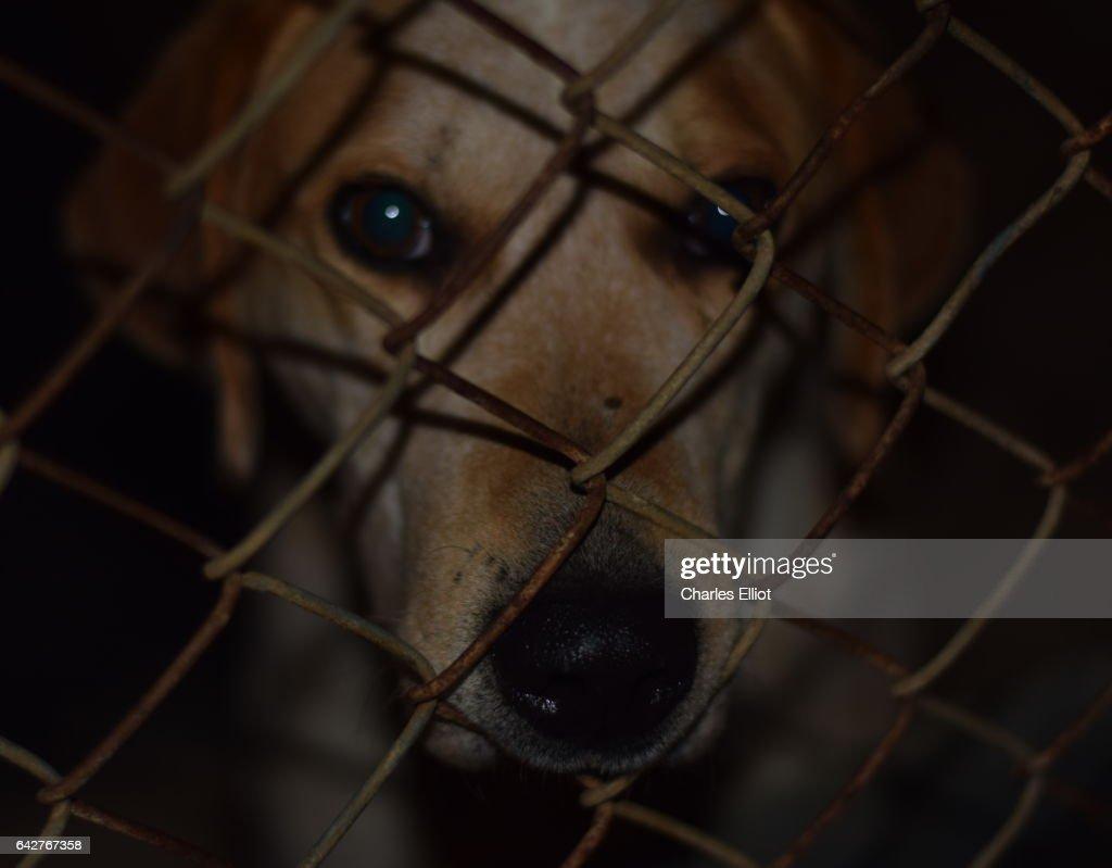 Pound Dog : Stock Photo