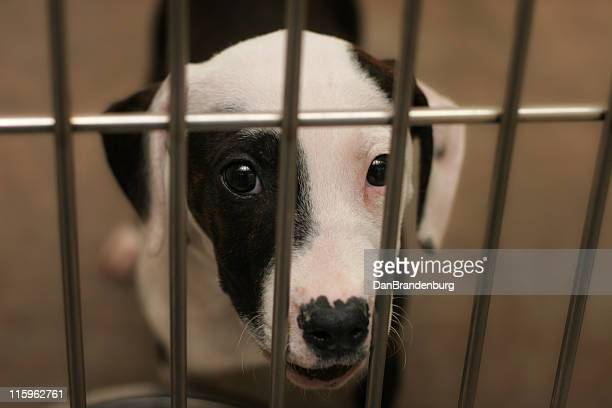 pound puppy - dog pound stock pictures, royalty-free photos & images
