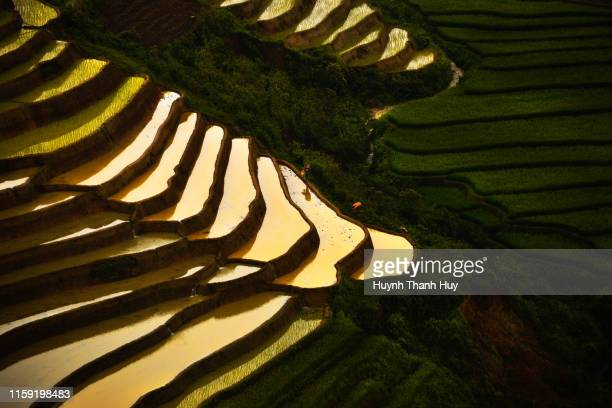 pour water season in lim mong rice field - mù cang chải stock pictures, royalty-free photos & images