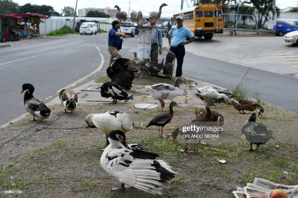 HONDURAS-ECONOMY-VENDORS-ANIMALS : News Photo