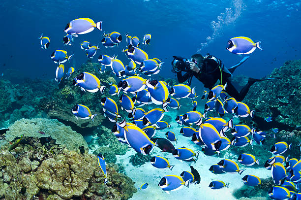Powderblue Surgeonfish Wall Art