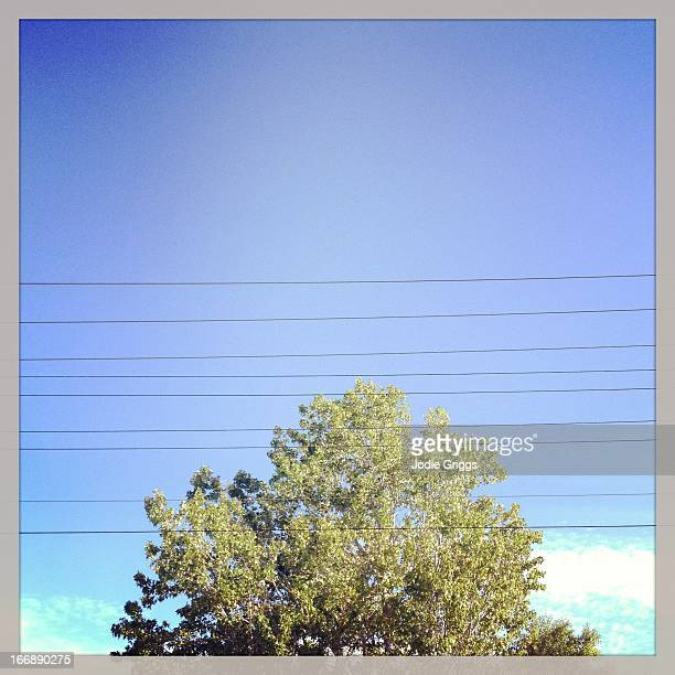 Power lines crossing in front of large tree