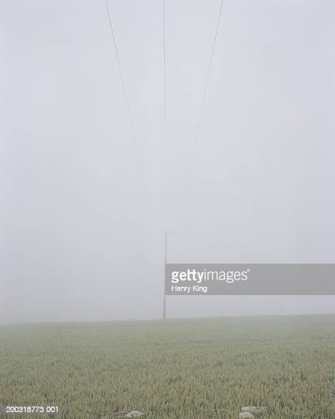 Power lines in misty field