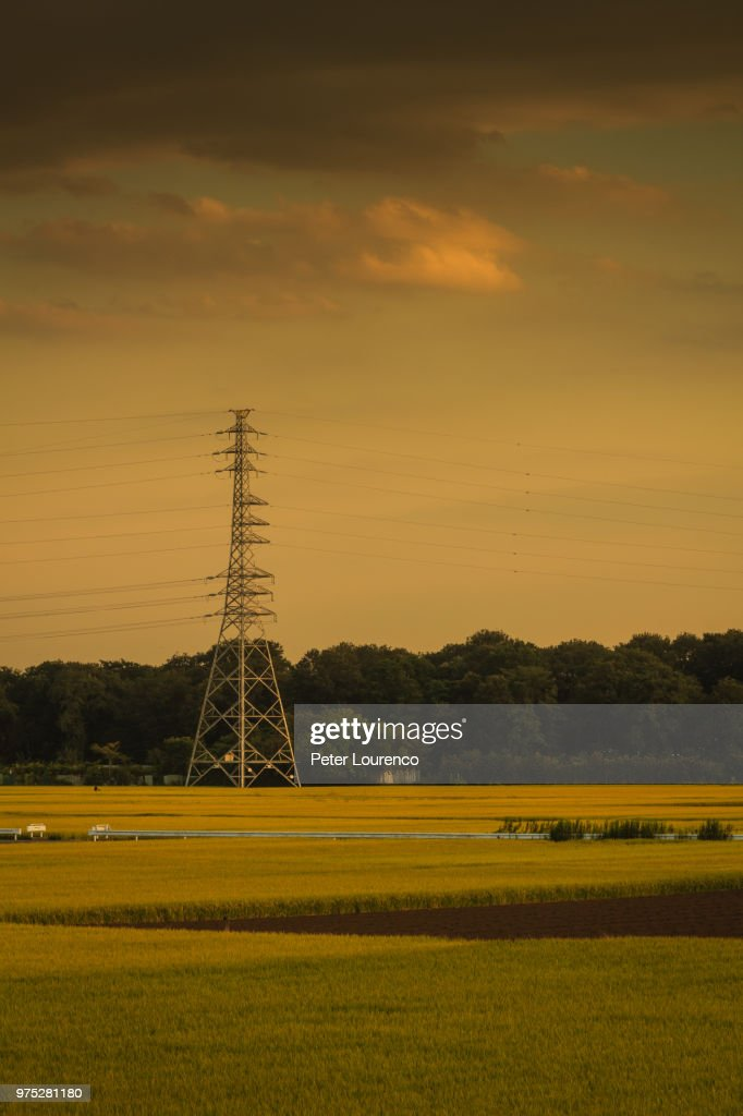 Power lines on a field. : Stock-Foto