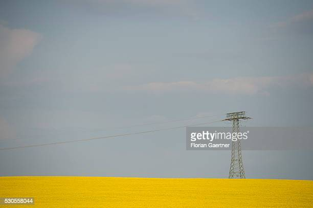 A power pole is captured of a field of rape on May 08 2016 in Goerlitz Germany
