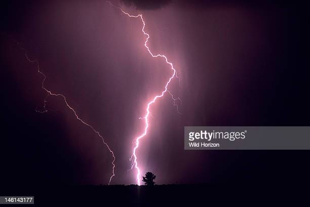 Powerful cloudtoground lightning strike misses a lone tree on the horizon Marana Arizona USA