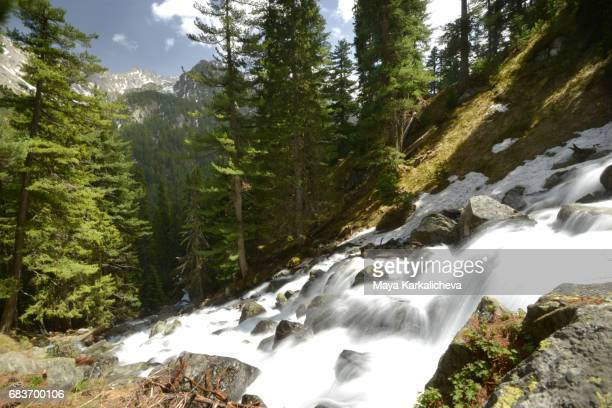 powerful pirin river going down the hill - pirin national park stock pictures, royalty-free photos & images