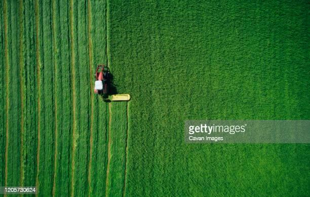 powerful transport symmetrically plowing green wheat field - grano graminacee foto e immagini stock