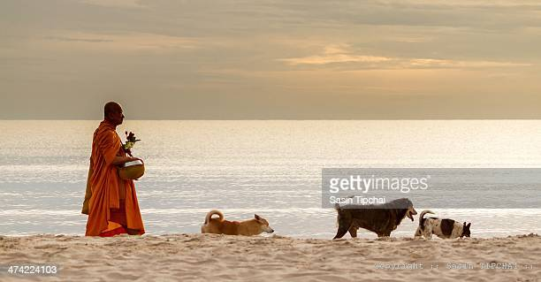 CONTENT] Prachuabkhirikhan Thailand September 222012 Thai monks the morning alms round on the beach with three dogs