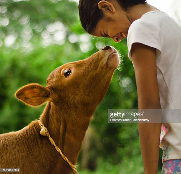 pradeepa and the calf - indian girl kissing stock photos and pictures