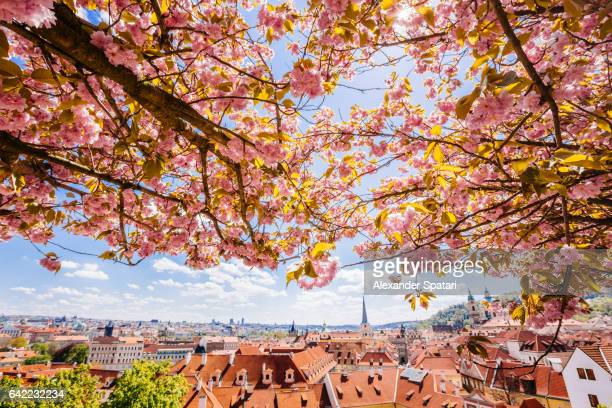 Prague skyline seen through the pink flowering trees, Czech Republic
