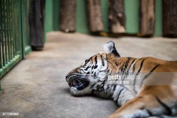 prague zoo, prague, czech republic - czech hunters stock photos and pictures