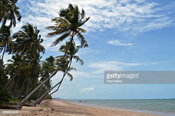 praia da laje - laje stock pictures, royalty-free photos & images