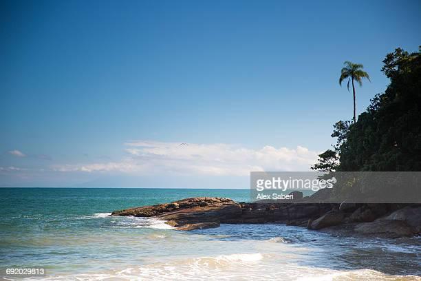 praia deserto and praia do cedro beaches in ubatuba, sao paulo state, brazil. - alex saberi bildbanksfoton och bilder