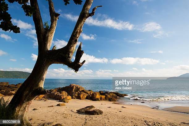 praia deserto and praia do cedro beaches in ubatuba, sao paulo state, brazil. - alex saberi photos et images de collection