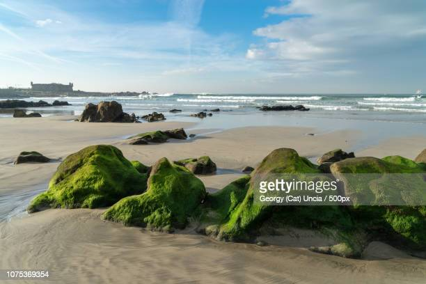 praia internacional near queijo castle, porto, portugal - queijo stock pictures, royalty-free photos & images