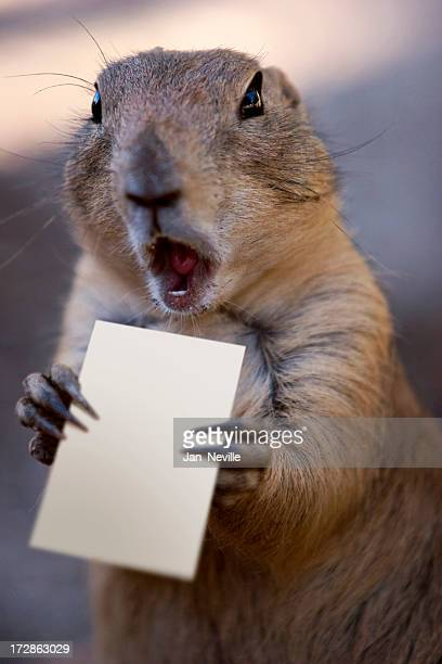 praire dog - prairie dog stock pictures, royalty-free photos & images