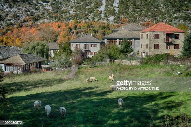 prairie at tsepelovo - epirus greece stock pictures, royalty-free photos & images