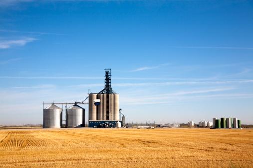 Prairie elevator and grain bin in a field of wheat 154926800