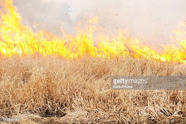 prairie grass wildfire - gras stock pictures, royalty-free photos & images