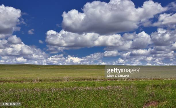 prairie grasses under skies of blue - great plains stock pictures, royalty-free photos & images