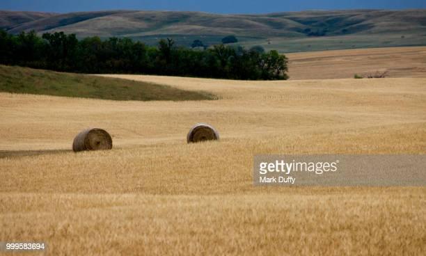 Prairie Life