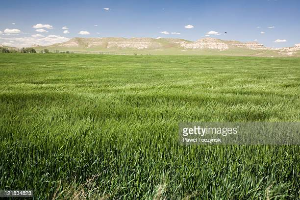 prairie, nebraska, usa. - nebraska stock pictures, royalty-free photos & images