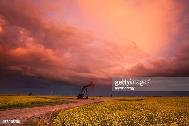 Prairie Oil Canola Field Saskatchewan