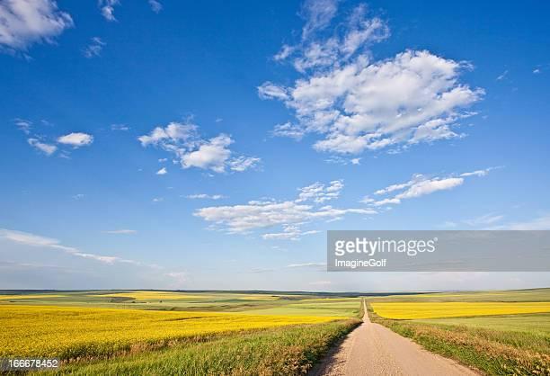 Prairie Road Through the Great Plains
