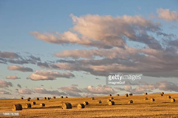 Prairie Scenic