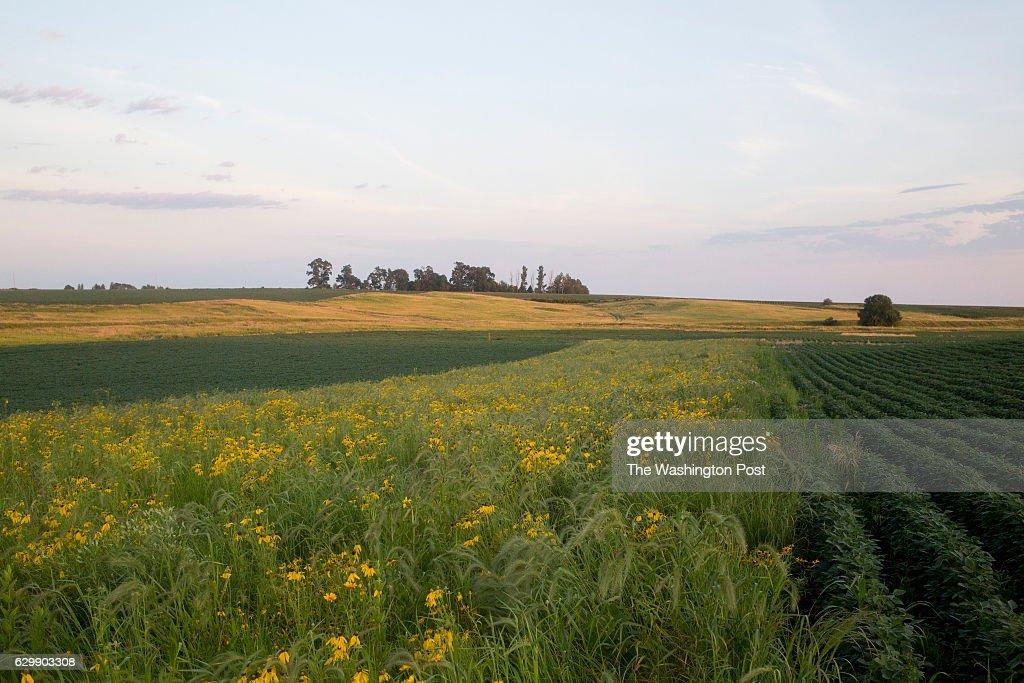 Farming Iowa's Prairie Strips : News Photo