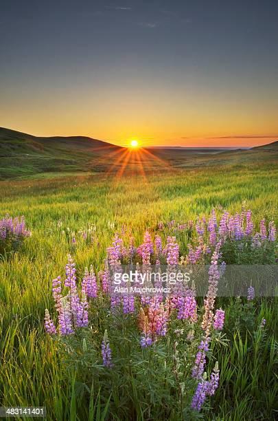 prairie sunrise near choteau montana - prairie stock photos and pictures