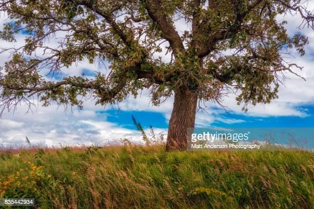 Prairie Tree Number 1