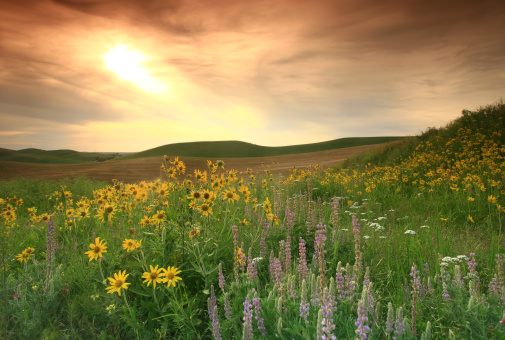 Prairie Wildflowers on the Great Plains 157431434