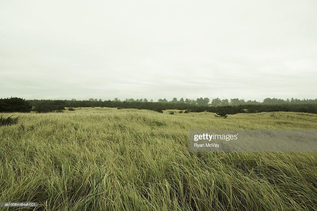 Prairie with distant trees : Stock Photo