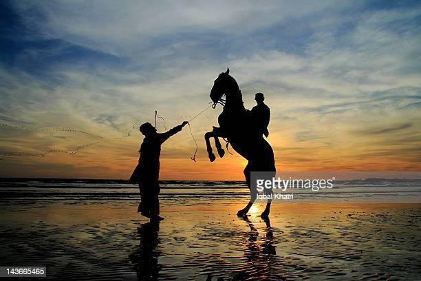 Prancing horse at beach
