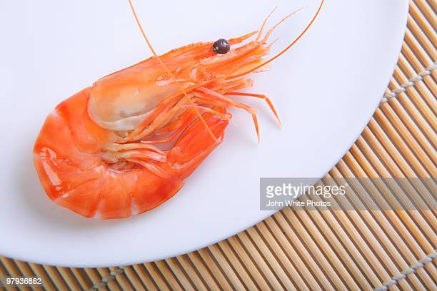 Prawn on a white plate