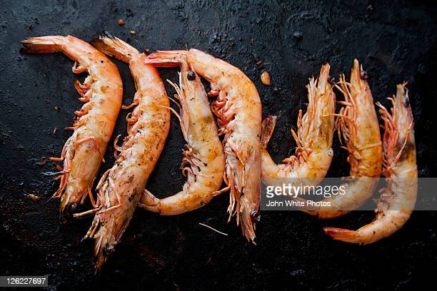 prawns on barbecue - south australia stock photos and pictures