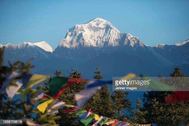 prayer flags on poon hill and the himalaya peak of annapurna south, nepal. - annapurna conservation area stock photos and pictures
