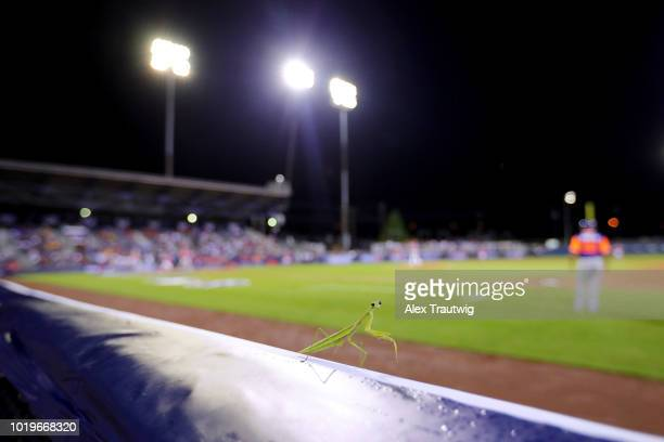 A praying mantis is seen on the railing during the 2018 Little League Classic between the New York Mets and the Philadelphia Phillies at Historic...