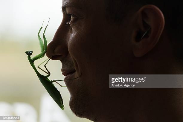 A praying mantis lands on Zookeeper Jamie Mitchell's face during the zoo's annual stocktake in London United Kingdom on January 3 2017 A requirement...