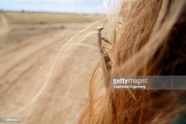 praying mantis on woman's hair, crimea - argenberg stock pictures, royalty-free photos & images