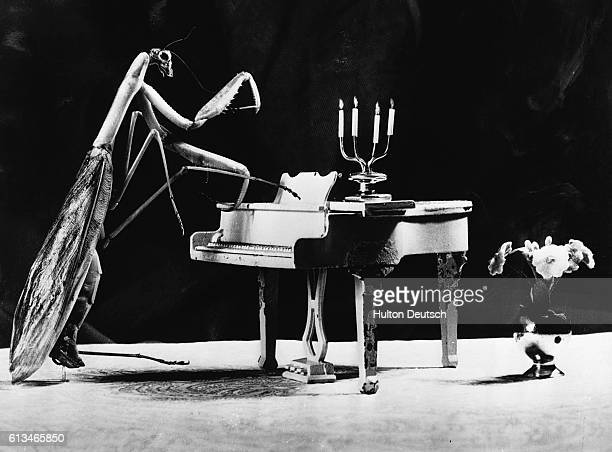 A praying mantis playing a small model of a piano