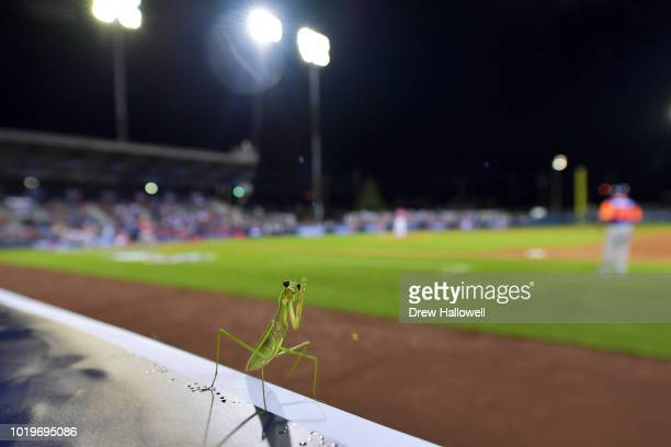 A praying mantis rests on the edge of the photo well during the inaugural MLB Little League Classic between the New York Mets and Philadelphia...