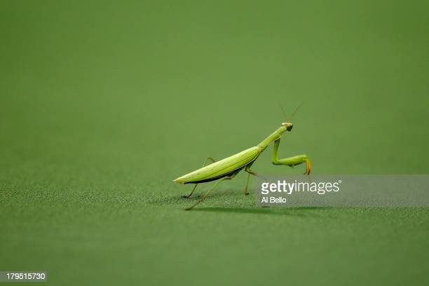 A praying mantis sits on the court during a men's singles quarter final match between Rafael Nadal of Spain and Tommy Robredo of Spain on Day Ten of...