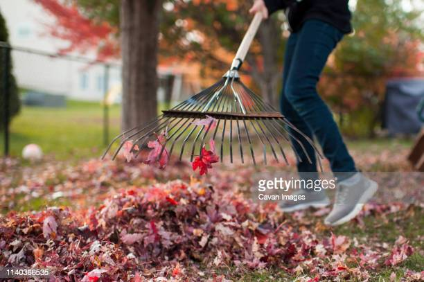 pre teen girl doing chores raking up colorful autumn leaves - rake stock pictures, royalty-free photos & images