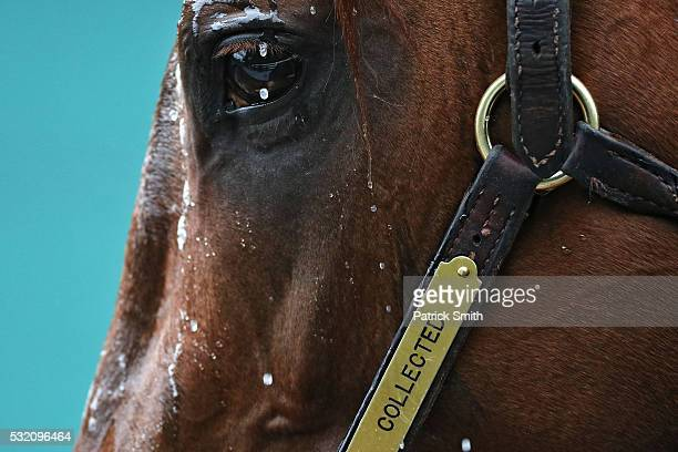 Preakness contender Collected is bathed following a training session for the 141st running of the Preakness Stakes at Pimlico Race Course on on May...