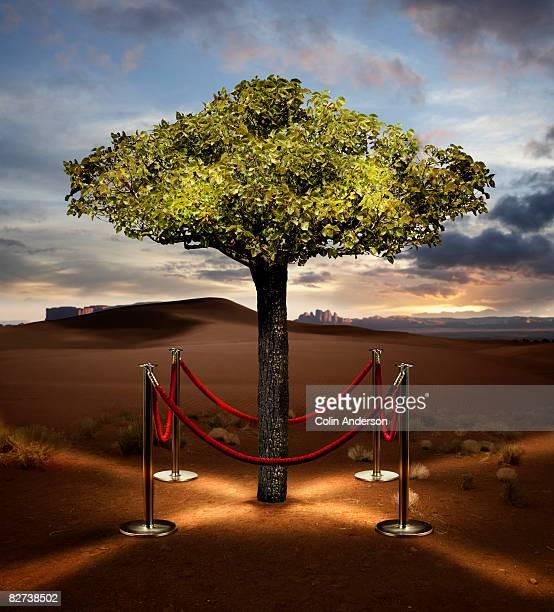 precious tree